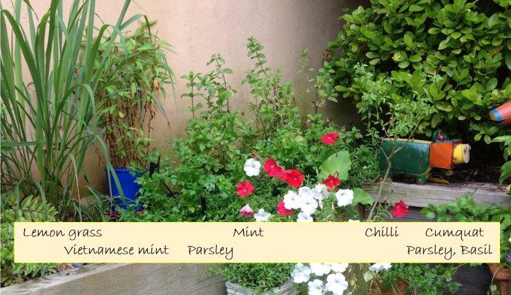 Herb Garden - Left side