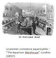 Premier commerce aqauriophile_The aquarium Warehouse_Londres_1855