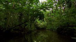 225992248-manglar-amazonas-rio-amazonia-mythos-amazonas
