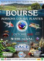 2018-10-07-bourse-aux-poissons-wihr-au-val-214x300