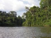 Rivière Amapá.