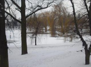 staw-w-parku-zima