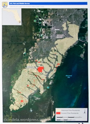 Historical & Current Pine Rockalnds in Miami-Dade County