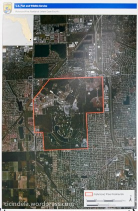 Richmond Heights Pine Rocklands (Miami Dade County)