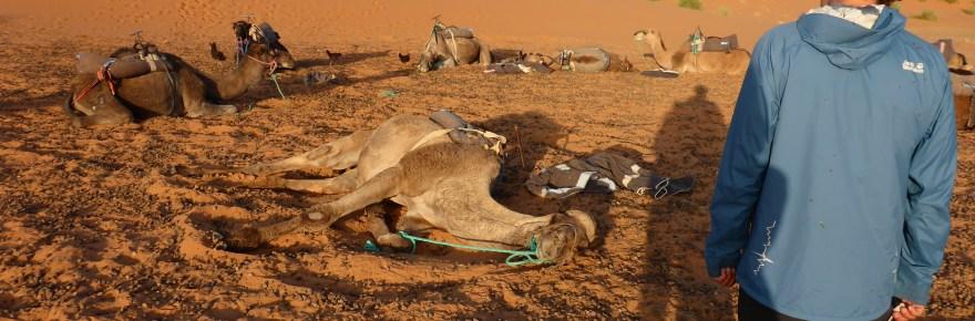 Ciclista nel deserto