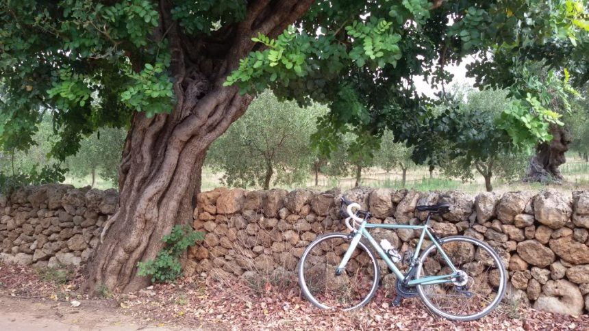 bici-di-Mariateresa-Montaruli-sotto-un-carrubo-in-Valle-dItria-in-Puglia-1024x576