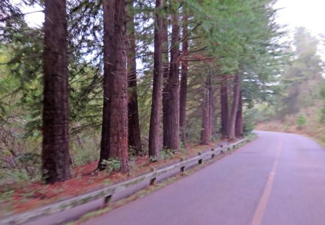 redwood04