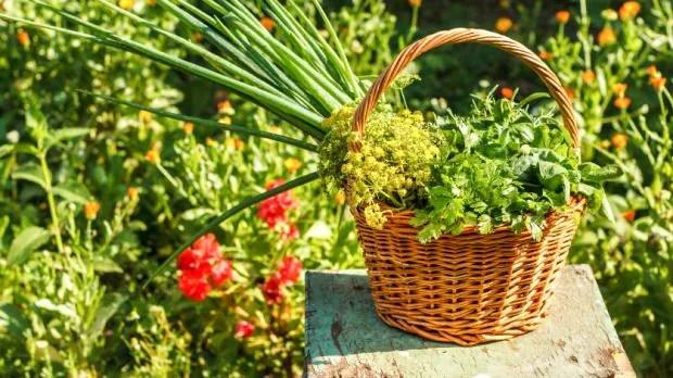 15 plantas que ajudam no controle de pragas na horta