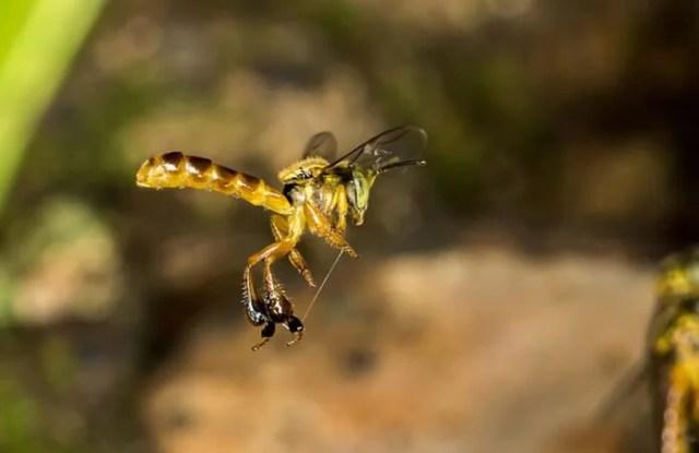 jatai abelha sem ferrão
