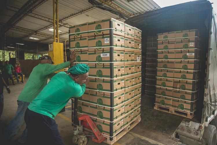 Exportación de banano superaría los US$1.000 millones en dos años