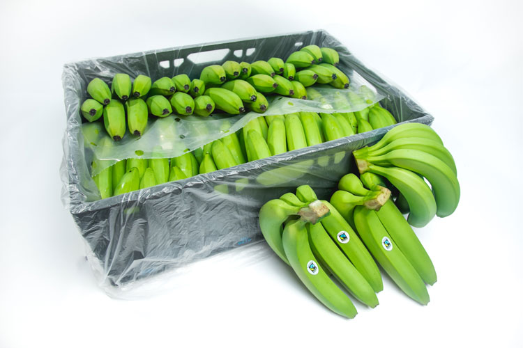 Colombia: Bananeros se alertan por baja en los precios