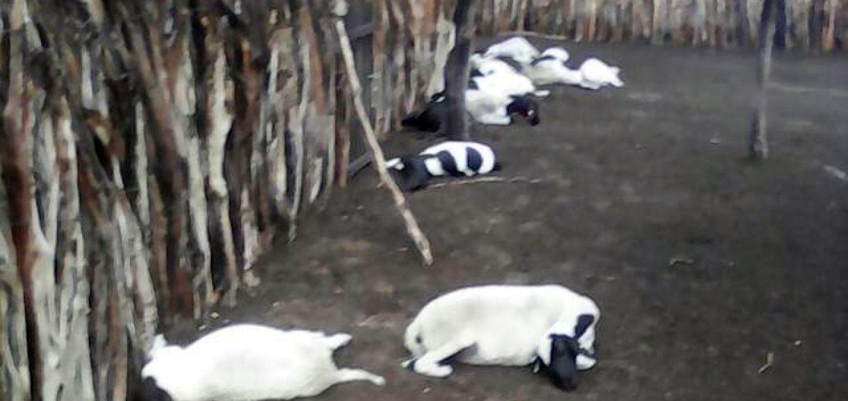 Raio atinge propriedade rural em Itainópolis e mata 15 ovelhas