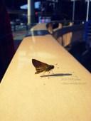 2010 - Le battement d'une aile de Papillon à Tokyo... Ne cessera de me faire rêver de sitôt.Tokyo - 2010