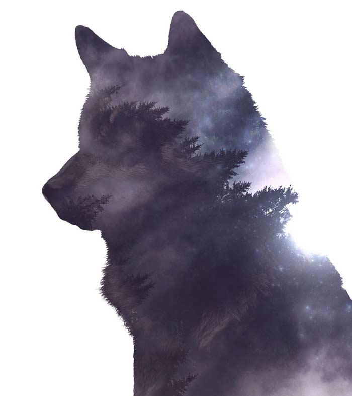 El lobo mexicano y la loba n.º 1203