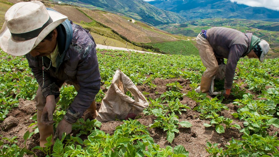 La economía colaborativa de los alimentos y las tecnologías, como vencer la guerra económica