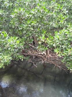 ciencia de cuba_ciencia cubana_Reserva Ecológica Siboney-Juticí_especies invasoras_Santiago de Cuba_3