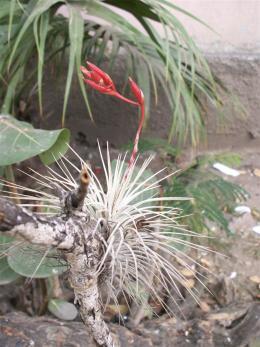ciencia de cuba_ciencia cubana_Reserva Ecológica Siboney-Juticí_especies invasoras_Santiago de Cuba_4