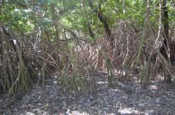 ciencia de cuba_ciencia cubana_manglares de cuba_santiago de cuba_III Taller Regional de Formación de Capacidades para el Manejo Costero (17)