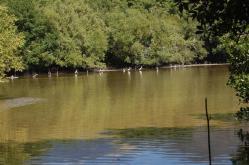 ciencia de cuba_ciencia cubana_manglares de cuba_santiago de cuba_III Taller Regional de Formación de Capacidades para el Manejo Costero (20)