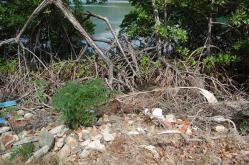 ciencia de cuba_ciencia cubana_manglares de cuba_santiago de cuba_III Taller Regional de Formación de Capacidades para el Manejo Costero (28)