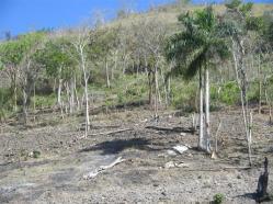 ciencia de cuba_portal de la ciencia cubana_protección de especies cinegéticas (19)