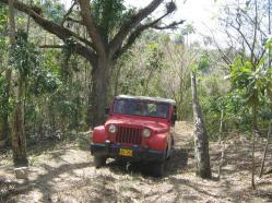 ciencia de cuba_portal de la ciencia cubana_protección de especies cinegéticas (29)