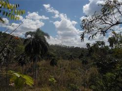 ciencia de cuba_portal de la ciencia cubana_protección de especies cinegéticas (62)