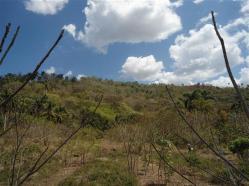 ciencia de cuba_portal de la ciencia cubana_protección de especies cinegéticas (65)