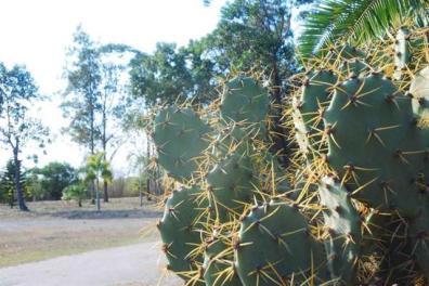 ciencia de cuba_ciencia cubana_jardin botanico de las tunas_cuba_4