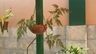 jardin del espiritu santo_centro historico_santiago de cuba (5)