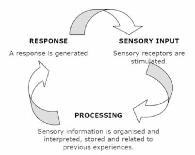 integração sensorial a
