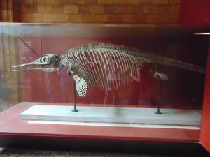 Muzeum Historii Naturalnej: Trochę prehistorycznych stworzeń w głównej nawie...