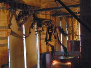 Muzeum Historii Naturalnej: Diżonaury!