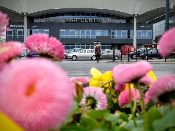 Warszawa kwitnie!