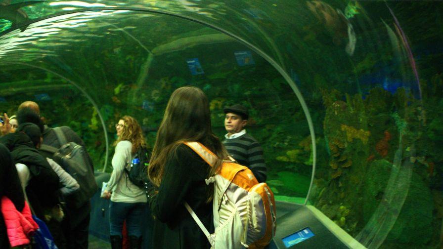 W Akwarium w Toronto tak się właśnie ogląda rekiny i rafę!