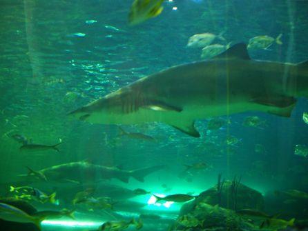 Rekiny w ich własnym świecie