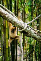 Radosne małpowanie w Animal Kingdom
