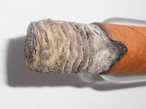 cigar with white light grey ash as a sign for high potassium conzent in the soil