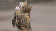Оксана вже йшла додому, але кішка поспішала за нею до під'їзду, нявкала — їй явно щось було потрібно. Що ж, жінка пішла за кішкою, а та привела її до мокрої коробки