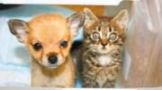 Друг в біді не кине: маленьке кошеня врятувало цуценятко. Тепер вони не розлий вода