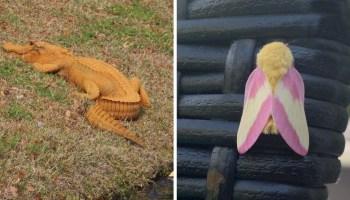 20 ситуацій, коли тварини та всі речі постали в невластивому кольорі, і очі не вірять побаченому