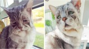 На вигляд це найсумніший кіт, але зовнішність оманлива