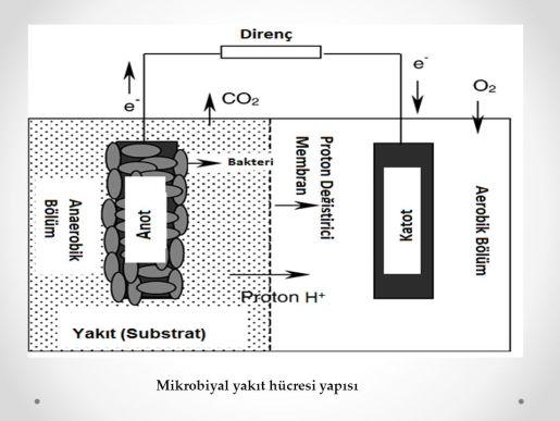 mikrobiyal yakıt hücresi
