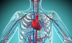 Kan dolaşımı bozukluğunu  gideren doğal yöntemler
