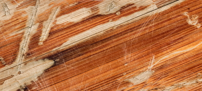 How to Repair Buckled Laminate Flooring   DoItYourself com     to Repair Buckled Laminate Flooring  What You ll Need