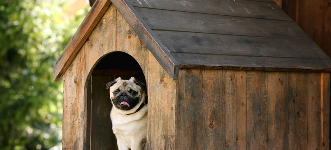 Image result for Does your dog need a dog house?