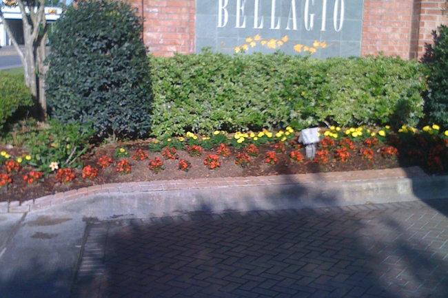 Bellagio Apartments 72 Reviews