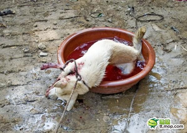 killing_dog_7