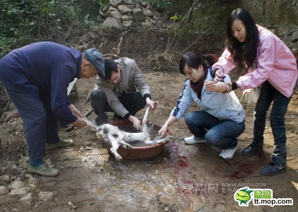 killing_dog_9