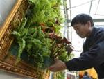 .._attualita_immagini_china-greenplants